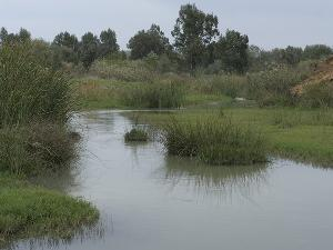 Río Guadiamar