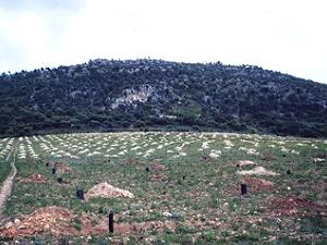 Sierra de la Acebuchosa
