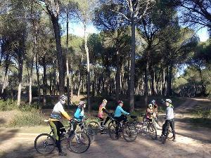 Pinares de Aznalcázar y sus zonas recreativas