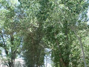 Jardín botánico de Buitrago