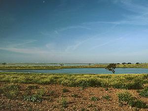 Reserva Natural Complejo Endorreico de Lantejuela-Osuna