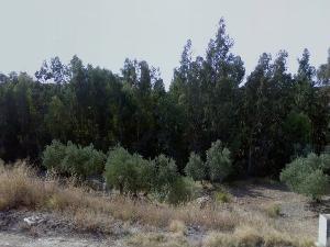 Arroyo de la Parra