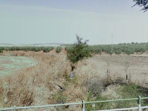 Arroyo de las Escobas