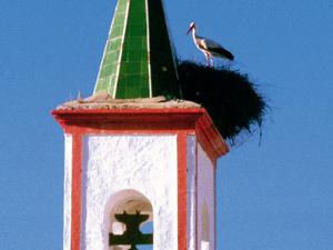 Fiestas Patronales de la Inmaculada Concepción en Coripe